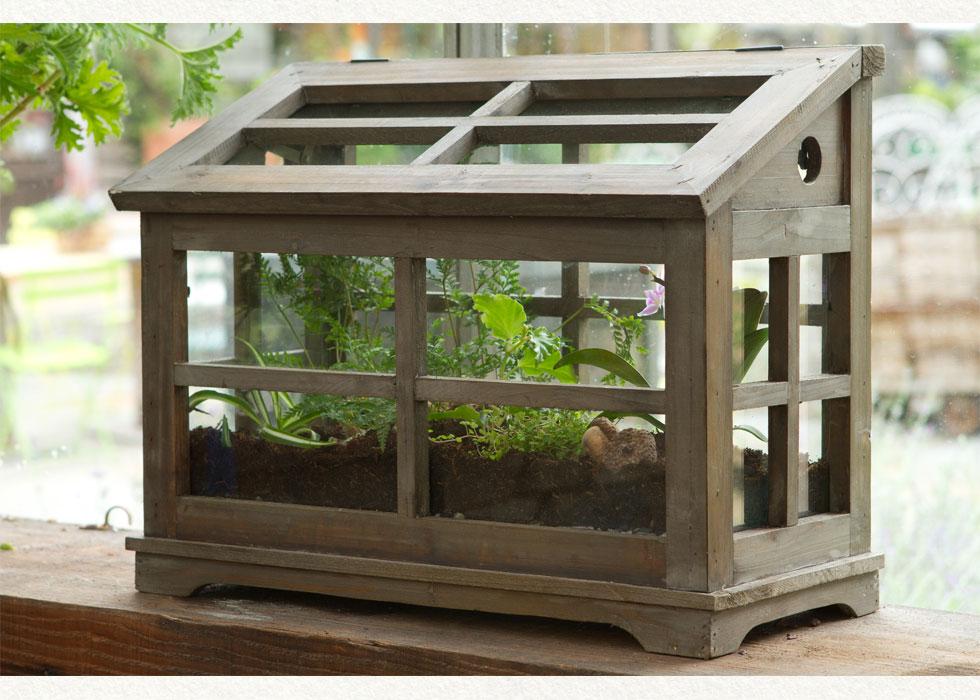 Plant Terrarium and Enclosed Wardian Case Terrarium | Lost ...
