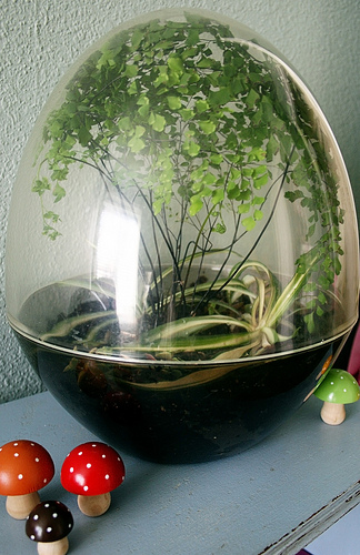 Plant Terrarium And Enclosed Wardian Case Terrarium Lost In Drawers